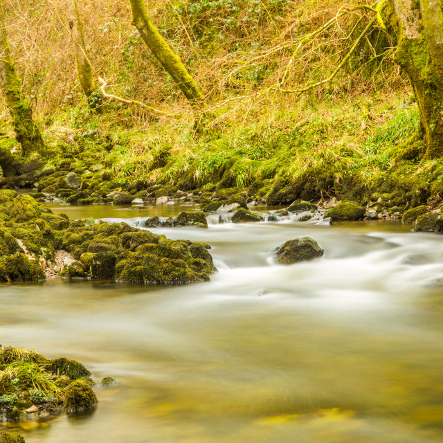"""Woodland River"" stock image"