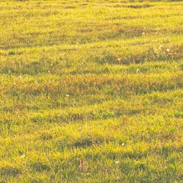 """""""Bright Summer Meadow"""" stock image"""