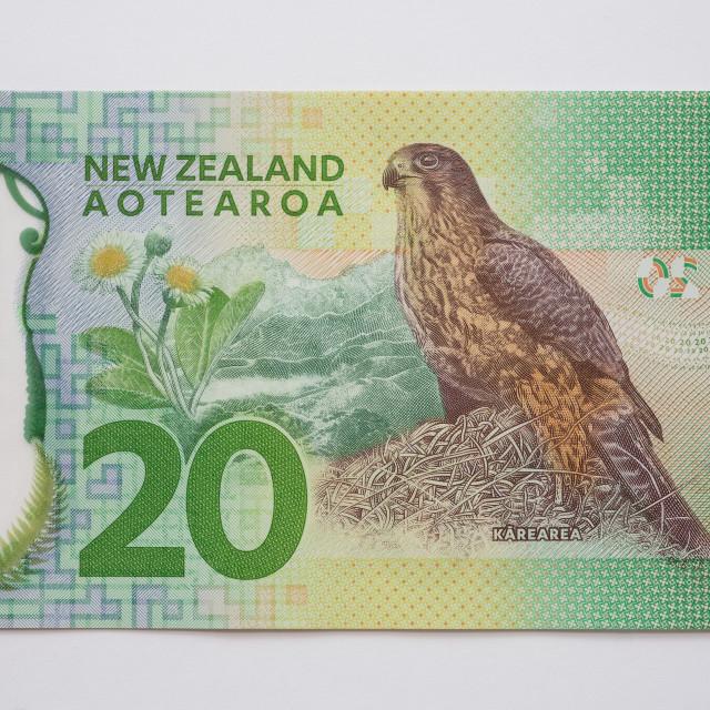 """""""New Zealand Twenty Dollar Note - Back"""" stock image"""