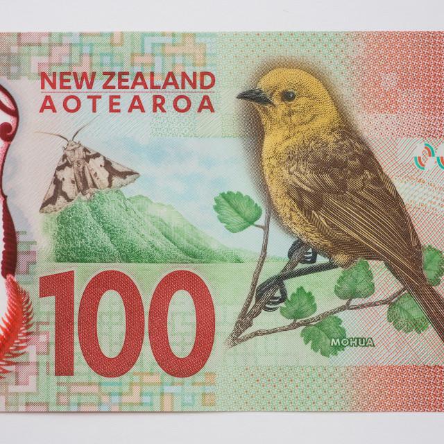 """""""New Zealand One Hundred Dollar Note - Back"""" stock image"""