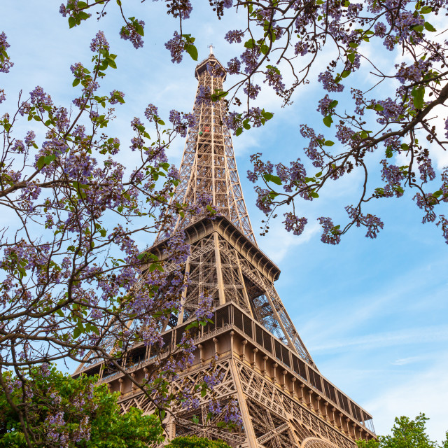 """""""Looking up at Eiffel Tower"""" stock image"""