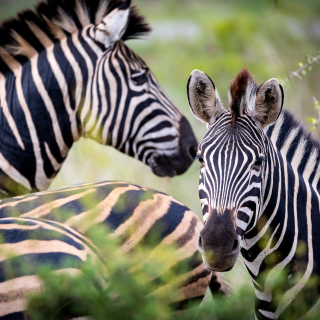"""""""Striped family"""" stock image"""