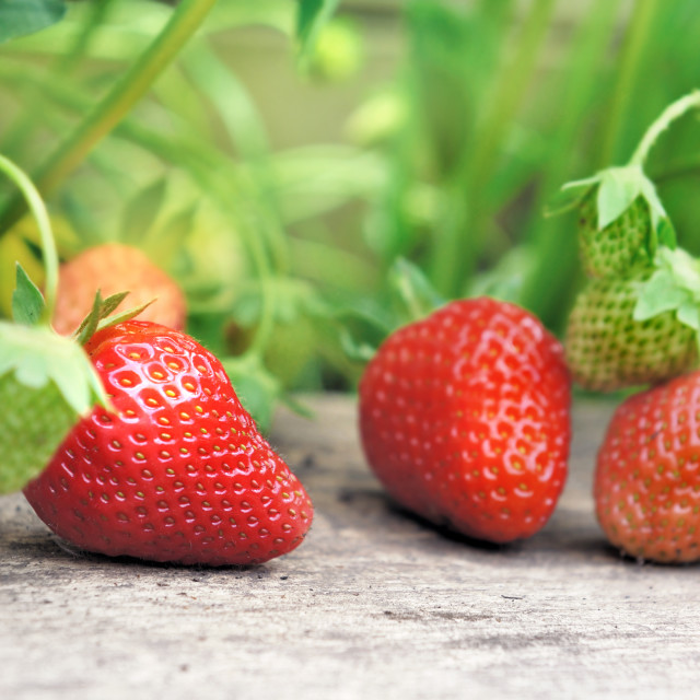 """""""fresh and ripe strawberrie on a plank"""" stock image"""