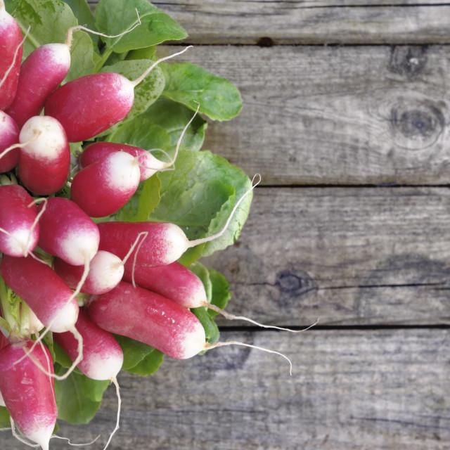 """""""radishes on wooden background"""" stock image"""
