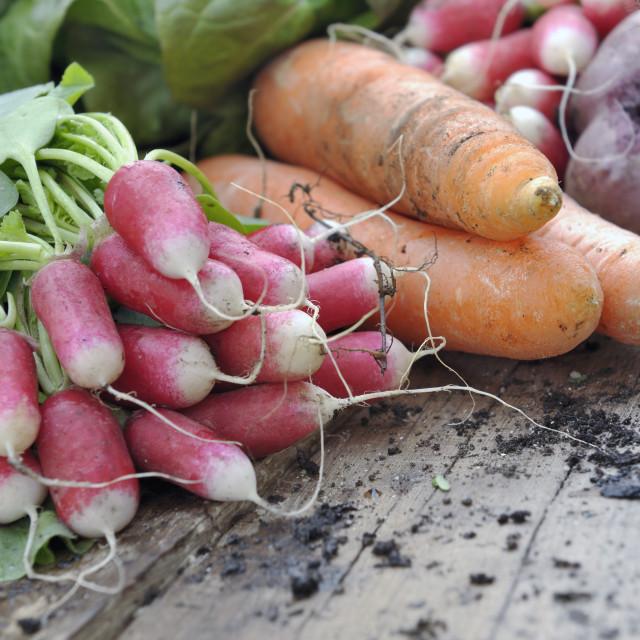 """""""fresh vegetables from garden"""" stock image"""