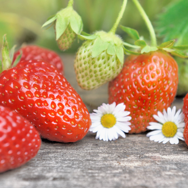 """""""fresh strawberries and flowers on a plank"""" stock image"""