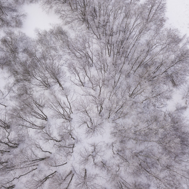 """""""Beautiful Winter forest"""" stock image"""