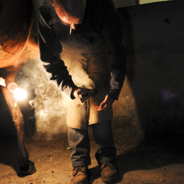 """Farrier fitting a shoe"" stock image"