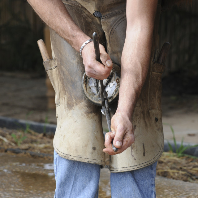 """Farrier shoeing a horse"" stock image"