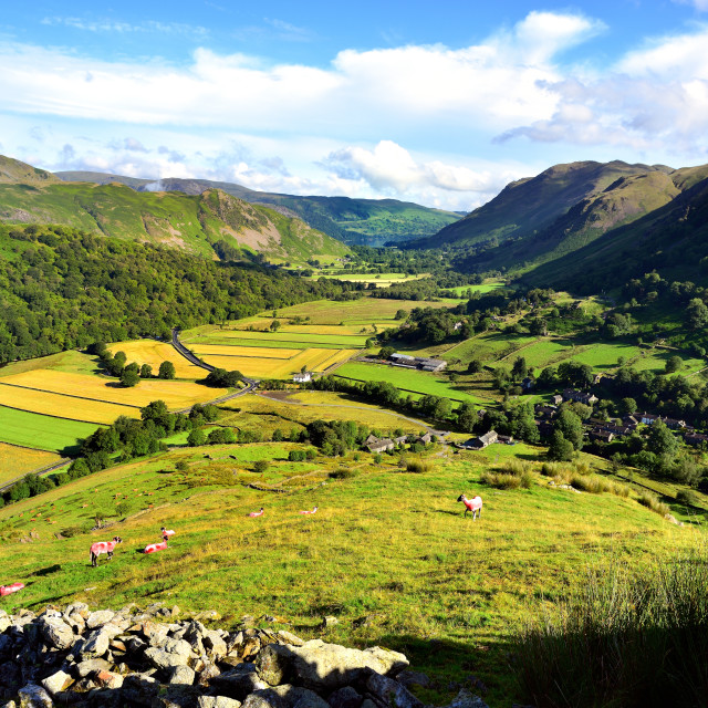 """The fields of Hartsop"" stock image"