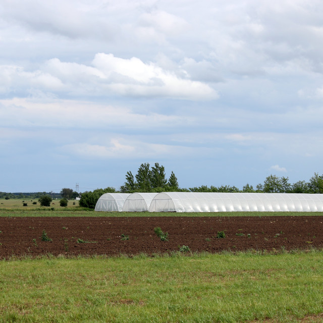 """""""greenhouse on field agriculture industry"""" stock image"""
