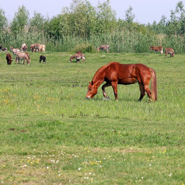 """brown horse on pasture summer season"" stock image"