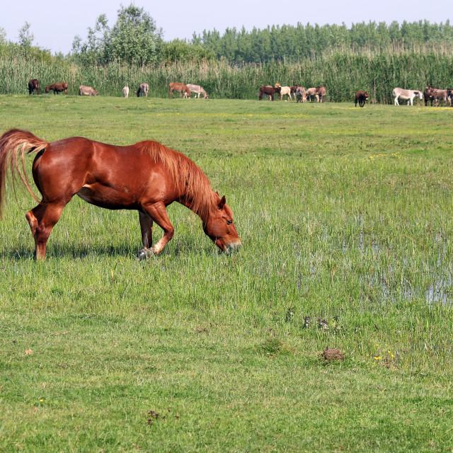 """brown horse on green field summer season"" stock image"