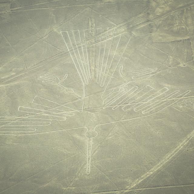 """""""Nazca, Peru - August 14, 2017: Condor figure of the Nazca lines in Nazca, Peru"""" stock image"""