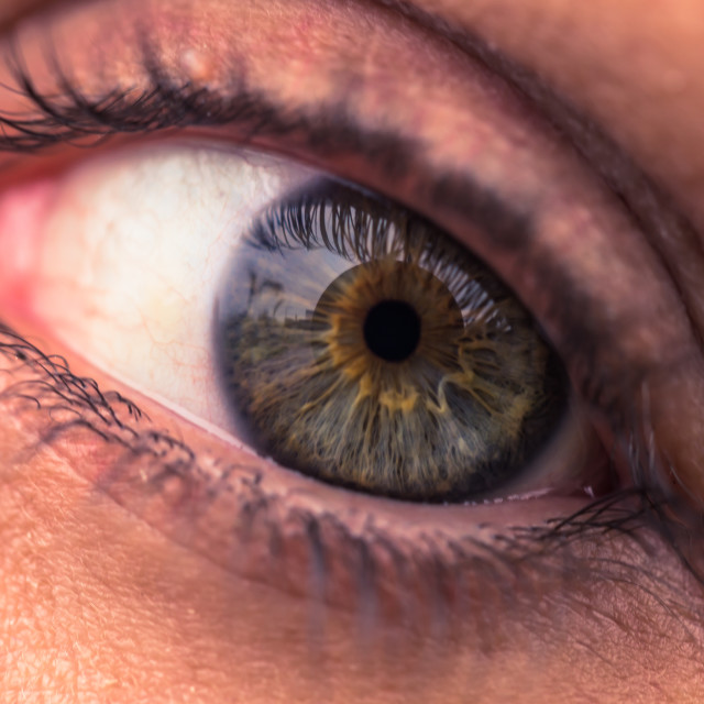"""""""Close-up of a female human green eye"""" stock image"""