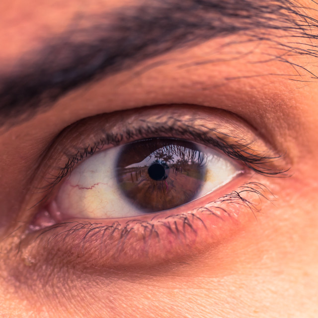 """""""Close-up of a male human brown eye"""" stock image"""