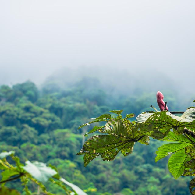 """""""Manu National Park, Peru - August 05, 2017: Wild flora of Manu National Park,..."""" stock image"""