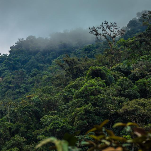 """""""Manu National Park, Peru - August 05, 2017: Wild jungle of Manu National..."""" stock image"""