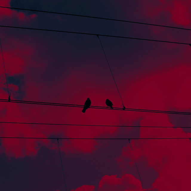 """""""CROWS WATCHING"""" stock image"""