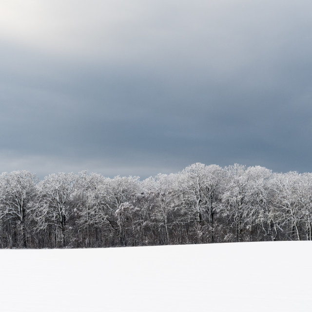 """""""Snow covered forest"""" stock image"""