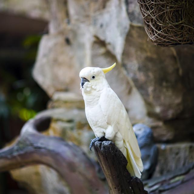 """White Parrot"" stock image"