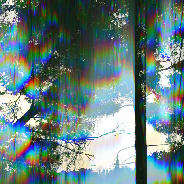 """prism trees abstract landscape"" stock image"
