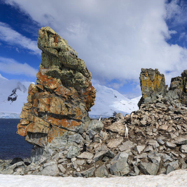 """""""Chinstrap penguins calling (Pygoscelis antarcticus) at a craggy colony, Half..."""" stock image"""