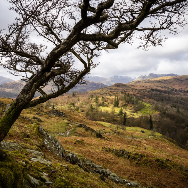 """Moody Loughrigg Fell"" stock image"