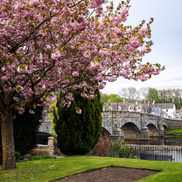 """Cherry Blossom At Newton Stewart"" stock image"
