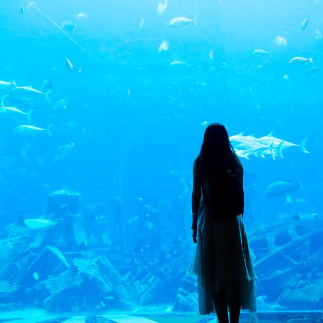 """""""Female observing large aquarium in Dubai"""" stock image"""