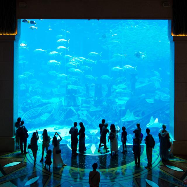 """Crowd gathered around large aquarium"" stock image"