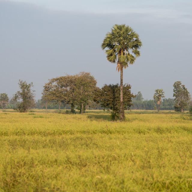 """THAILAND BURIRAM LANDSCAPE FIELD"" stock image"