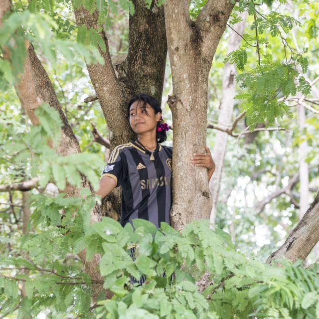 """""""THAILAND BURIRAM TREE TAMARIND"""" stock image"""