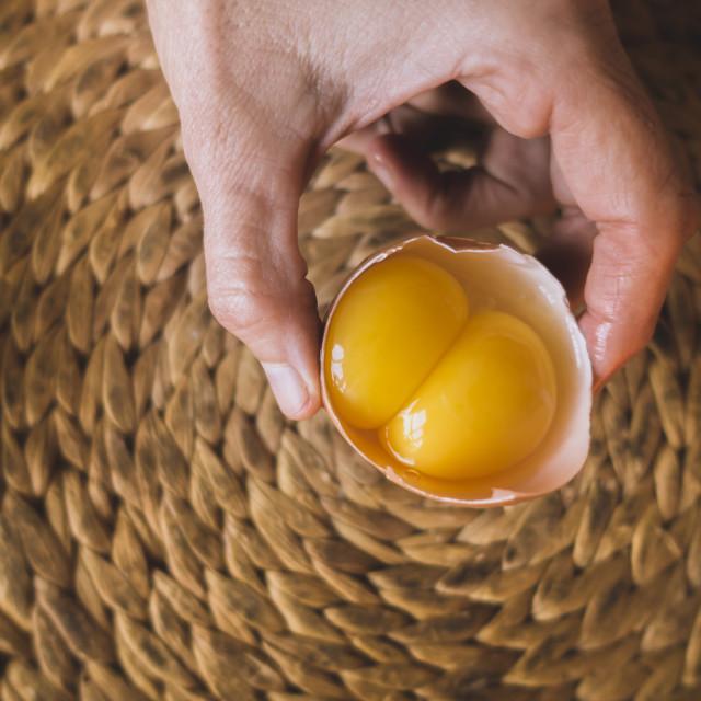 """hand holding double-yolk egg"" stock image"