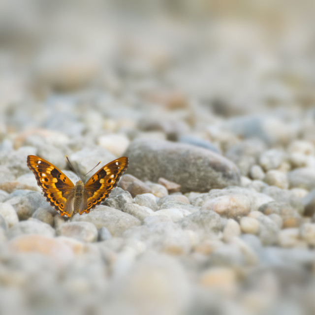"""""""Butterfly on Pebble Ground"""" stock image"""