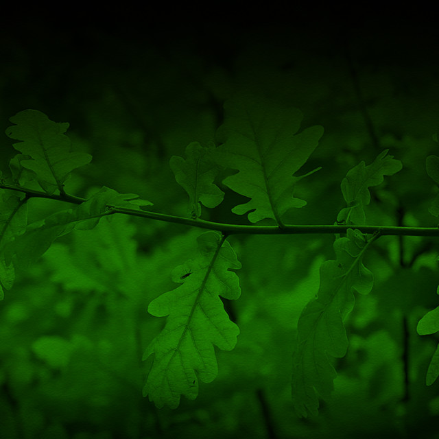 """Oak Leaves Graduated Green Background"" stock image"