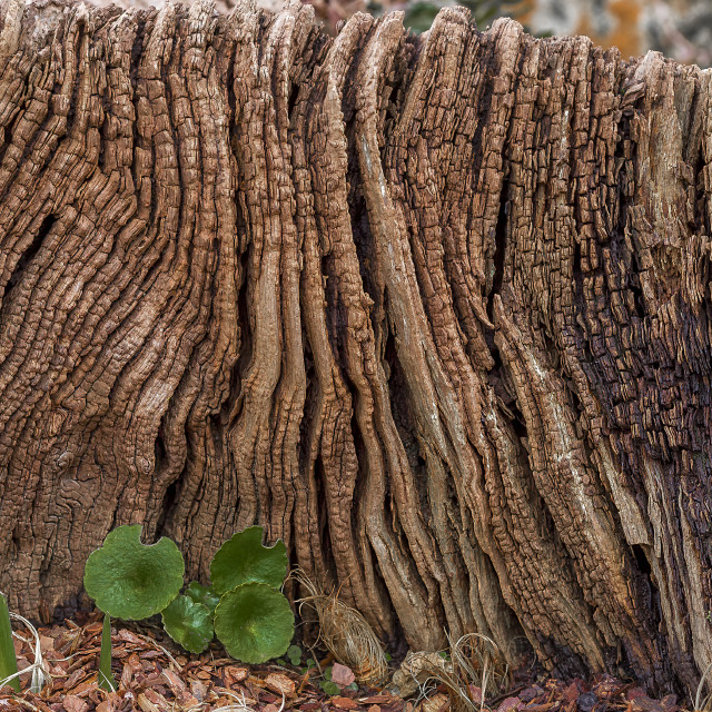 """Tree Texture"" stock image"
