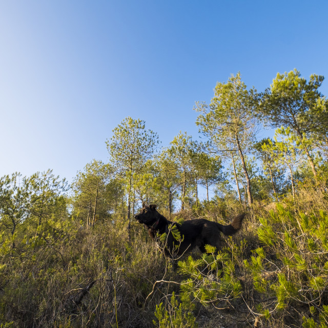 """Natural Park of Garraf"" stock image"