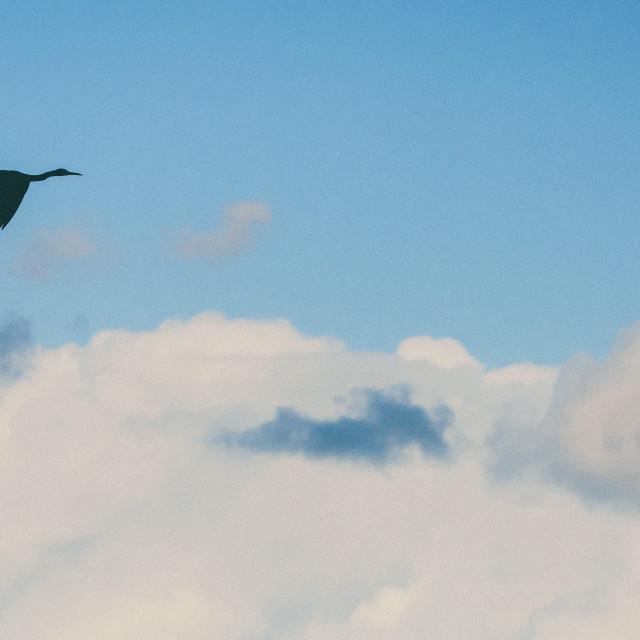"""""""Patagonia Bird"""" stock image"""