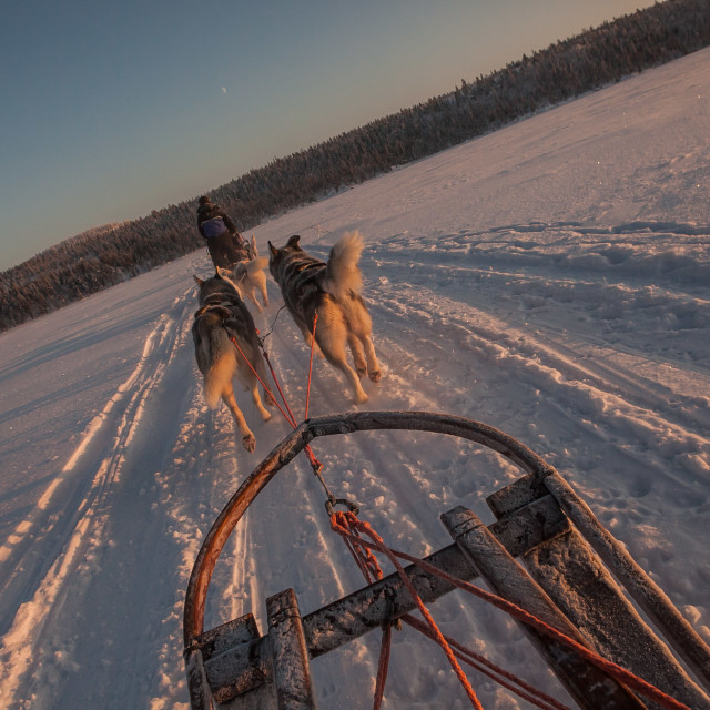 """Abisko Dog sledding Sweden"" stock image"