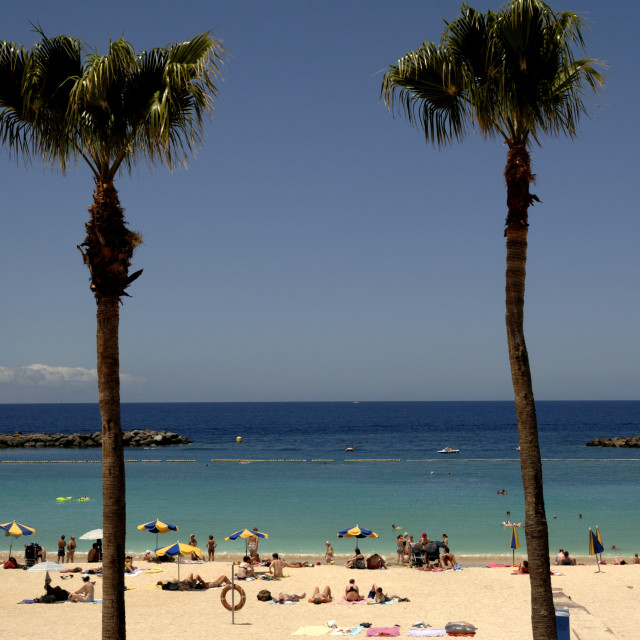 """""""One woman and two palm trees. , Gran Canaria."""" stock image"""