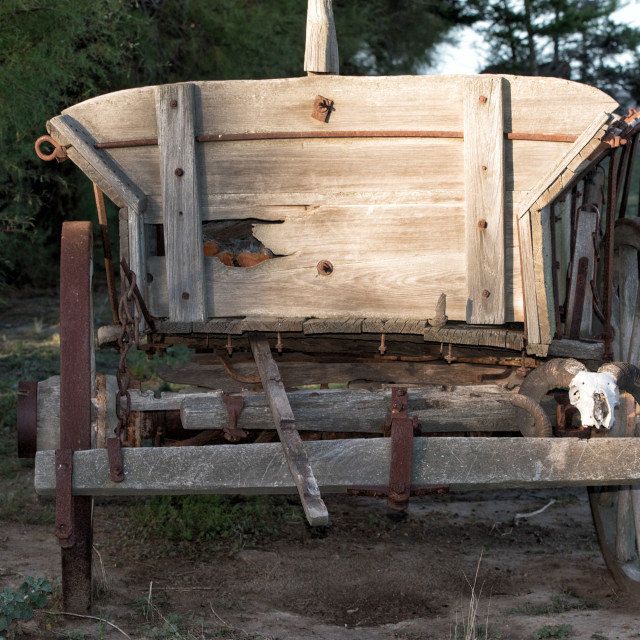 """sheep skull on far west wagon"" stock image"