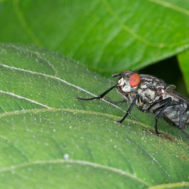 """isolated fly on the green background"" stock image"