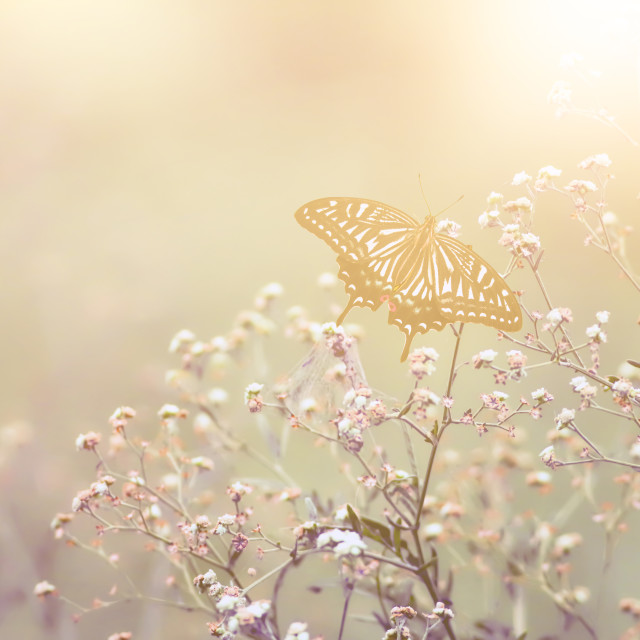 """Beautiful Vintage Butterfly Image"" stock image"