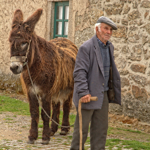 """Old man and donkey"" stock image"