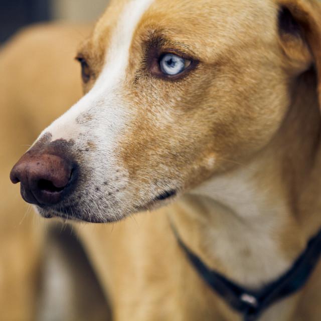 """""""Polish dog"""" stock image"""