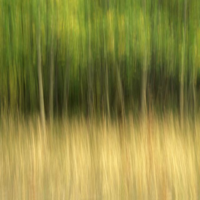 """Aspen tree abstract"" stock image"