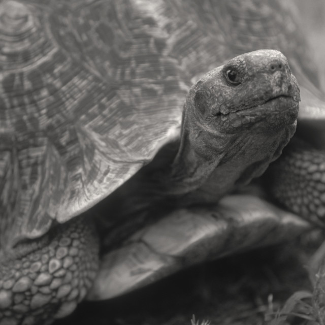 """tortoise"" stock image"