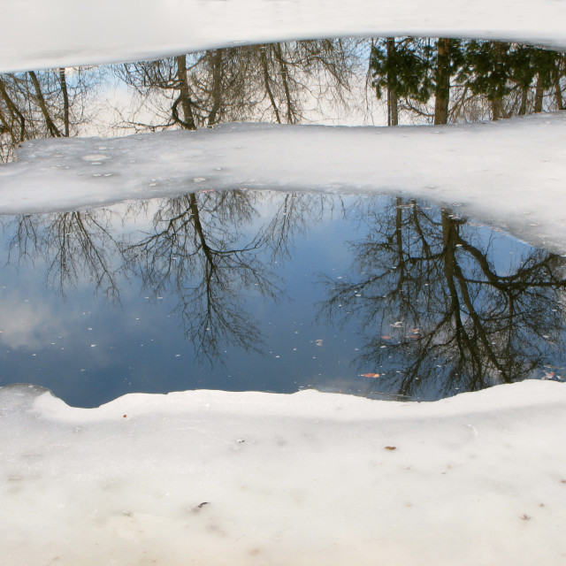 """Tree Reflections in icy pond"" stock image"