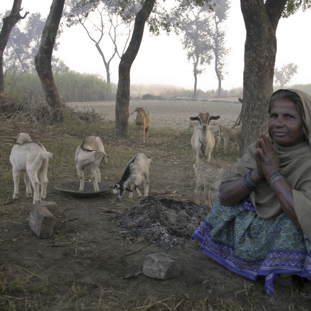 """Woman with goats-69639"" stock image"